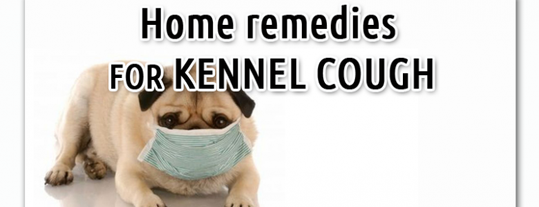 Kennel Cough - A Dog's Common Cold